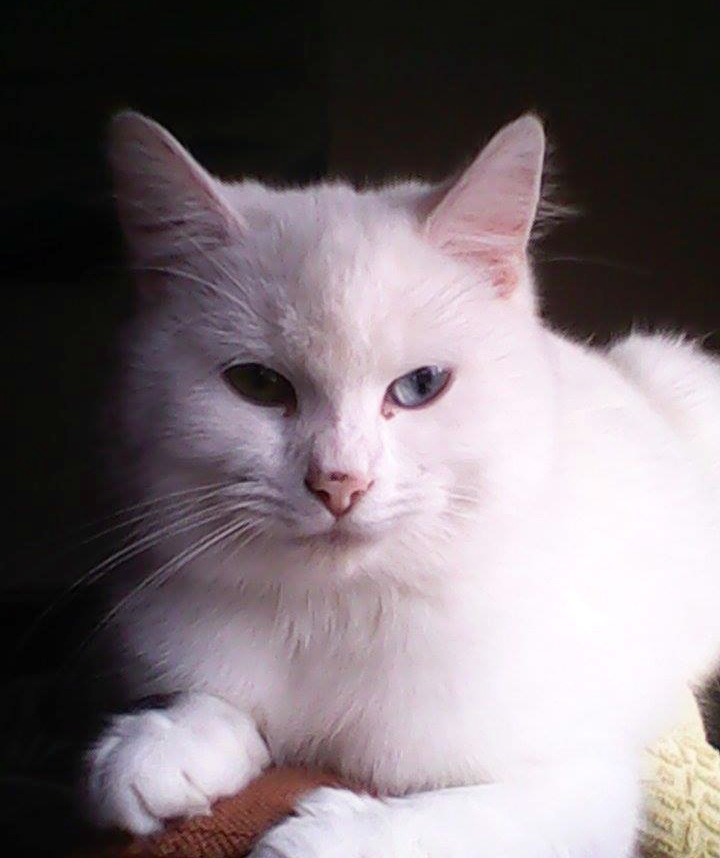 witte poes2