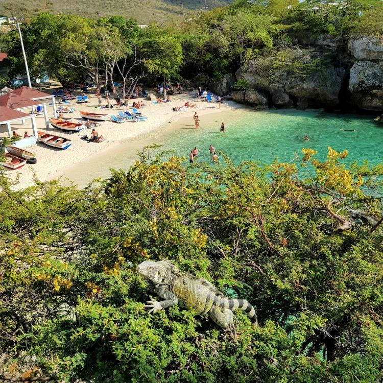 Playa Lagun lunch met leguanen
