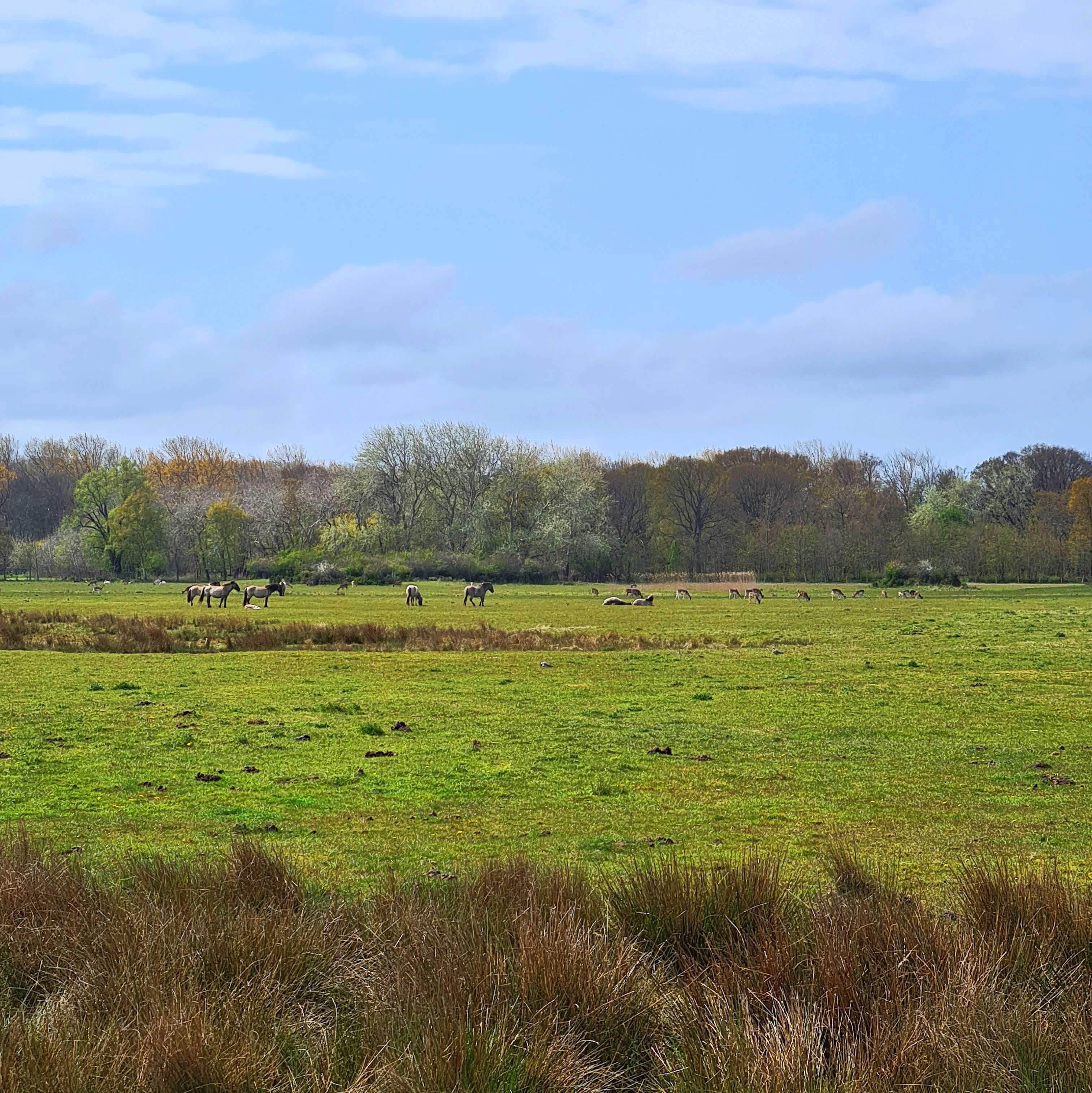 Konikpaarden en hertjes